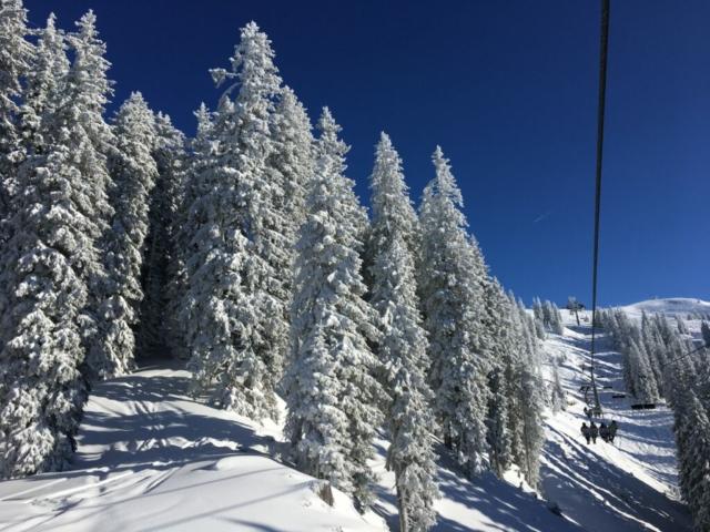 Besneeuwde bomen in Jochberg